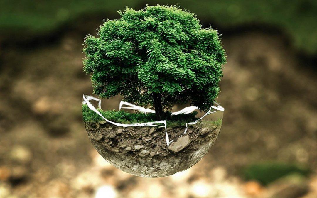 Árbol dentro de cuenco natural